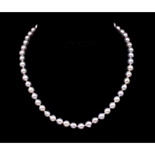 58 - Silver Akoya pearl necklace marked AU 585 to ball clasp. Approx 7.5mm-8mm semi baroque and round nat...