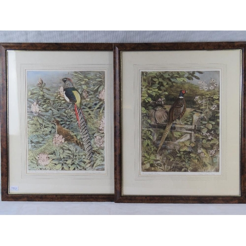 170 - Two limited edition Peter Partington colour prints of a ''Lady Amherst Pheasant'' (49cm x 38cm) sign...