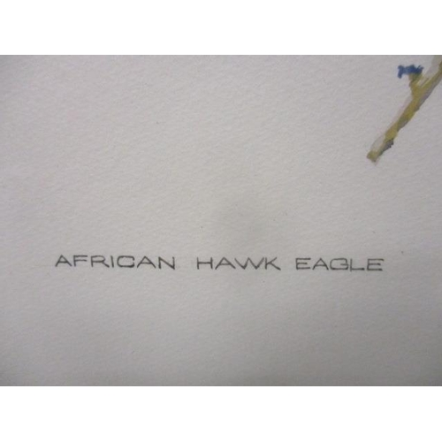 260 - Leigh Voigt - 'African Hawk Eagle' watercolour, signed and dated 1971 lower right, 20