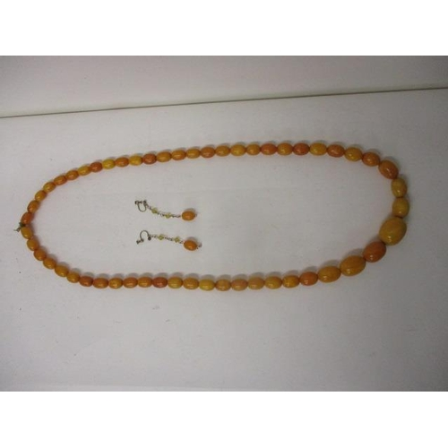 4 - A large necklace of 54 graduated yellow, egg yolk coloured,  amber beads, total length 36 1/2