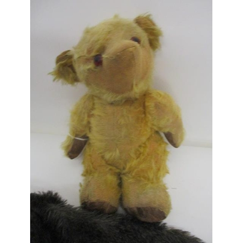 28 - An early 20th century teddy bear with golden mohair, amber glass eyes, pointed muzzle and rexine pad...