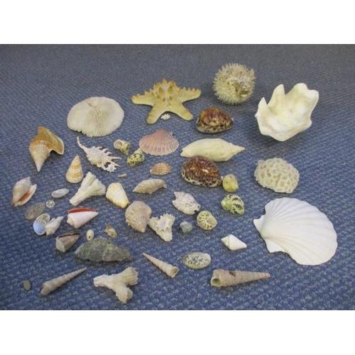45 - Shells, coral and a puffa fish...