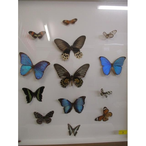 3 - A small framed and glazed collection of thirteen butterflies...