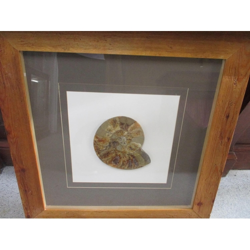 20 - A framed and glazed Madagascan ammonite...