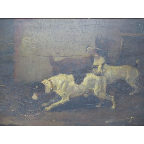 321 - Early 20th century British School - a study of three terrier dogs by a trap, oil on panel, signed in...