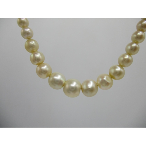 246 - A natural pearl necklace with a gold clasp set with diamonds, with Certificate...