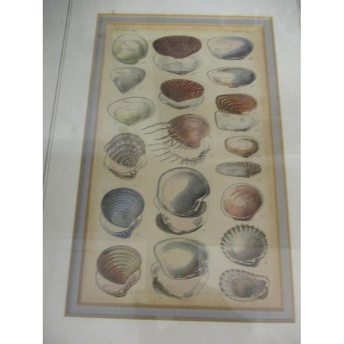 111 - Pictures to include art posters, botanical prints and a limited edition print Location: BWR...