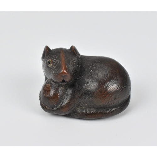 24 - A Japanese carved wood netsuke, 19th century, modelled as a rat holding a nut, its tail coiled benea...
