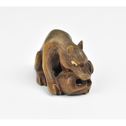 28 - A Japanese cared wood netsuke, 19th century, modelled as a wolf and skull, with textured hair, unsig...