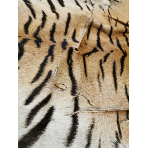 76 - An early 20th century taxidermy Bengal Tiger (Panthera tigris tigris) rug with head mount, with open...