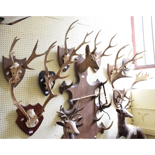 1 - Eight sets of deer antlers, on wood shields, the largest 61 cm wide...