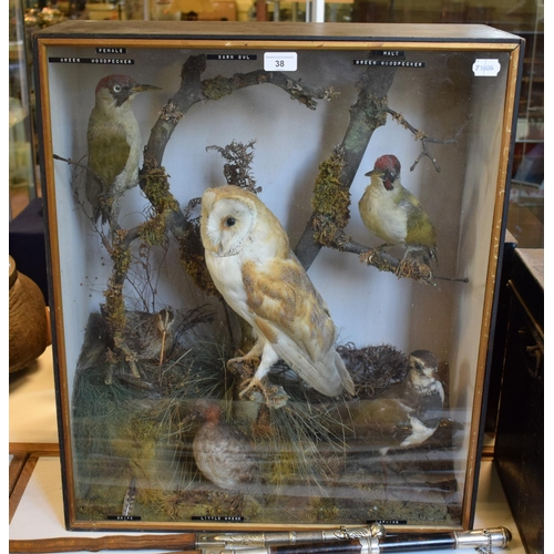 38 - Taxidermy: A display of British birds, including a Snipe, a Barn Owl and a Lapwing, cased, 57 cm wid...