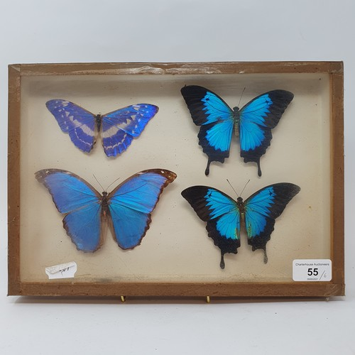 55 - Taxidermy: various mounted butterflies, in six frames (6)