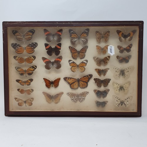 59 - Taxidermy: various mounted butterflies, in six frames (6)