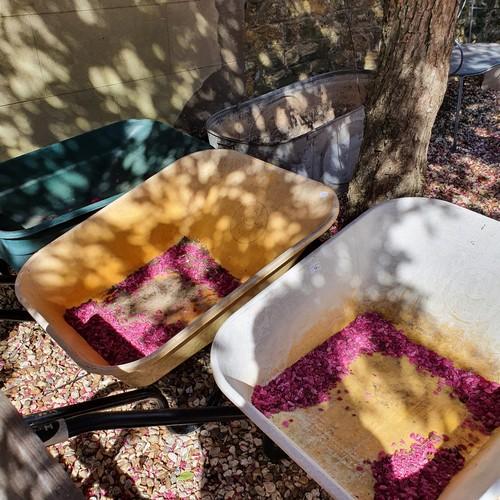 14 - A tin bath, and three wheelbarrows (4)