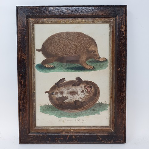 158 - The Common Hedgehog, a 19th century print, 23 x 17 cm, a 19th century print of pigs, 19 x 25 cm, and...