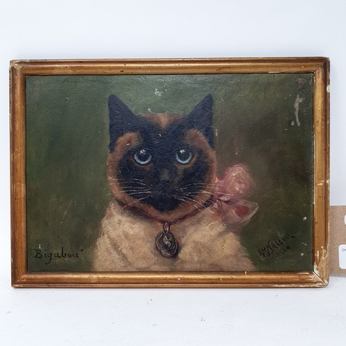 177 - E. M. Nelson, a study of a cat, Bigabois, oil on board, signed and dated 1920, 17 x 25 cm