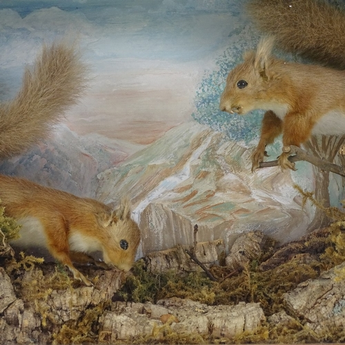 25 - TAXIDERMY - 2 red squirrels in naturalistic setting, signed T Holton 1886, in glazed cabinet, 60cm x...