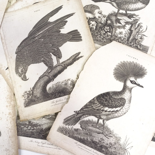 1176 - Folder of early 19th century prints, birds and animals...