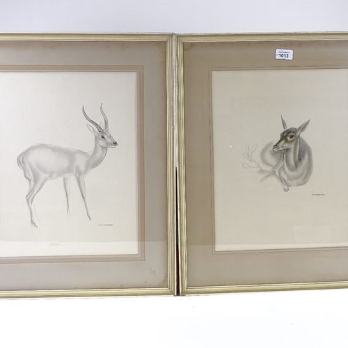 1013 - John Skeaping, pair of lithographs, deer, signed in the plate, 16