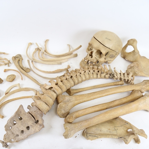 15 - A 19th century human skeleton, in original Deal box with Millikin & Lawley label
