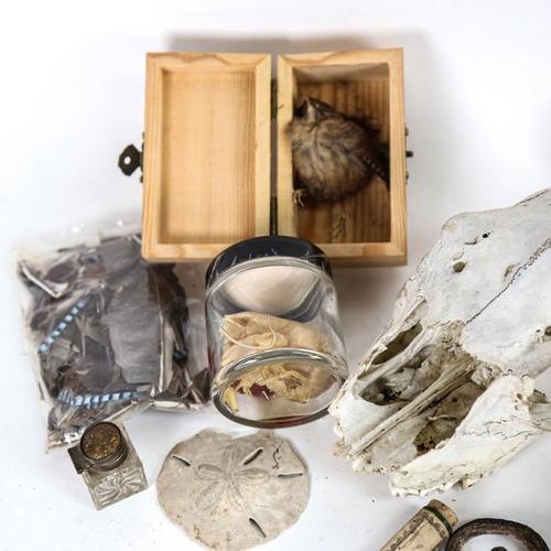 6 - TAXIDERMY - various animal specimens, skull, crayfish, seahorse etc (boxful)