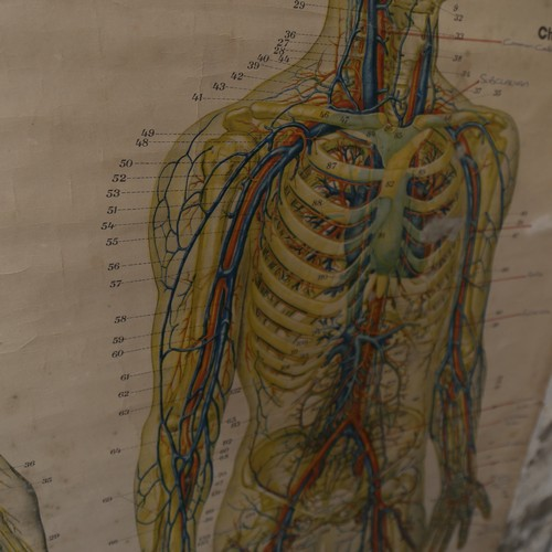 4 - An American Frohse anatomical chart, by Adam, Rouilly & Co, edited revised and augmented by Max Brod...