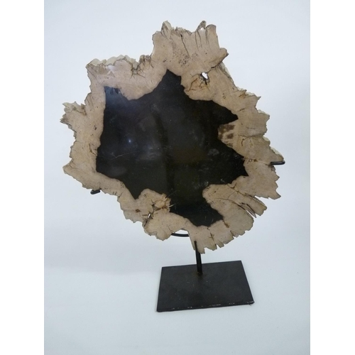 40 - Triassic Polished Period Petrified Wood mounted on black metal base...