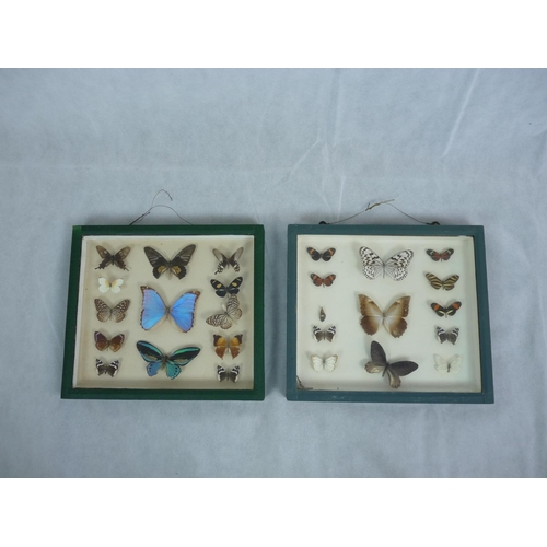 57 - Pair of Framed collections of Taxidermy Butterflies...