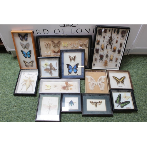 44 - Large Collection of Cased Taxidermy inc. Insects and Butterflies...