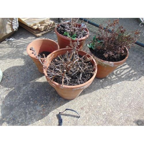 31 - Qty terracotta garden pots