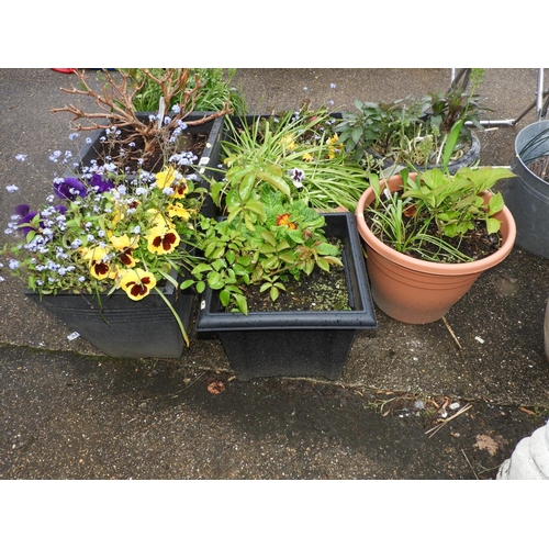 19 - Quantity of Planters and Contents...