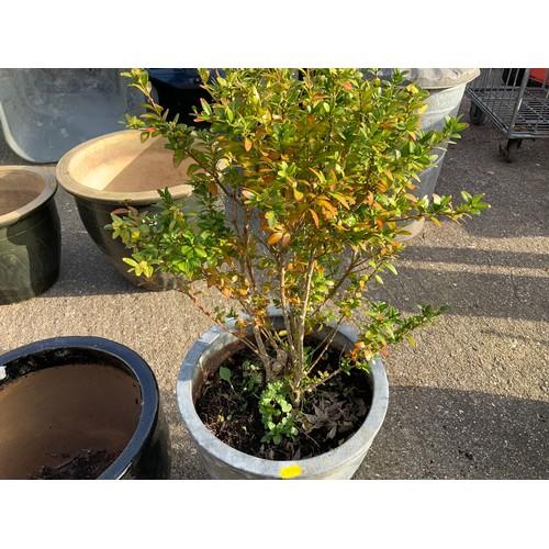 50 - 2x Planters