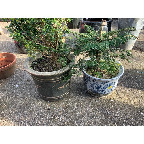 39 - 2x Glazed Planters and Contents