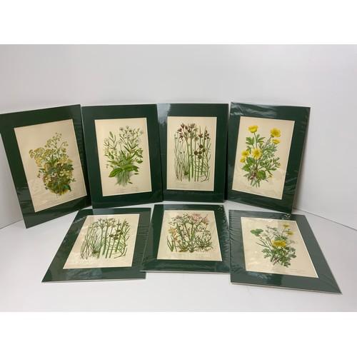 718 - 7x Anne Pratt Botanical Prints 1870, Matching Mounts