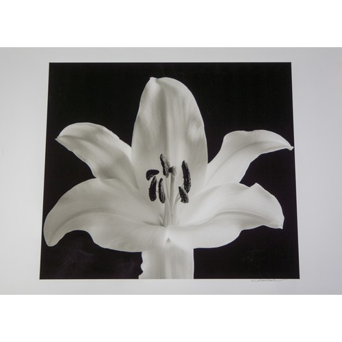 35 - H Arakawa. Flower photograph on heavy paper, signed....