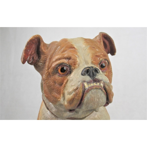 26 - A Large Austrian 19th C Terracotta Cold Painted Figure of a Bulldog. Seated and set with glass eyes....