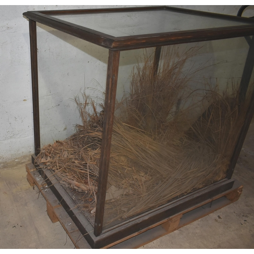 15 - A glass display case, orig. displaying a lion                                                       ...