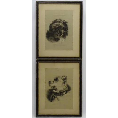 125 - E. Groves XIX, Pair of charcoal drawings with heightened white, Portraits of a bull mastiff and a lo...