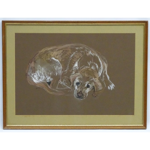 127 - SACS '72 Canine School, Gouache and charcoal dog portrait, Yellow Labrador , recumbent gundog ?, Sig...