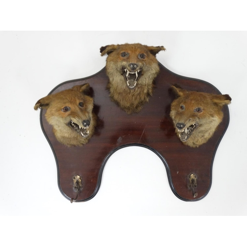 68 - Taxidermy : An Edwardian mahogany wall plaque with three affixed Fox masks and two hangers , bears l...