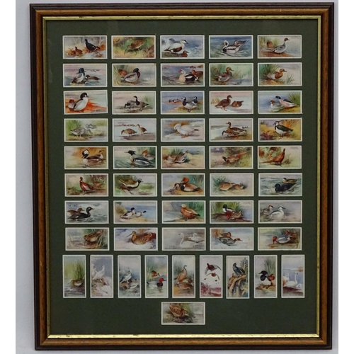 89 - Players Cigrette cards, Game Birds and Wild Fowl,  A complete set of 50 double sided ,framed 19 1/2 ...