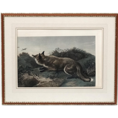 92 - Hunting / Widlife, After Charles George  Lewis (1808-1880) after Edwin Landseer, Coloured etching, '...