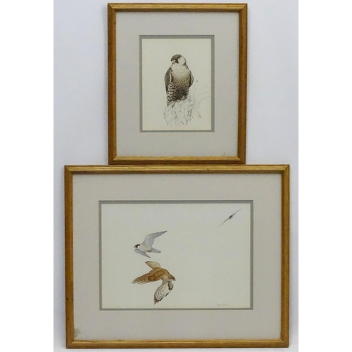 93 - Alastair Robertson XX, Pen ink and watercolour together with an Aquatint (2), Peregrine Falcons etc ...