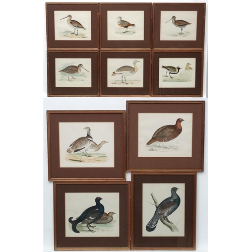 98 - Avian Studies : Old Game Bird Aquatints x 10 ' Red Grouse ' ' Black Grouse ' ' Woodcock '  ' Great S...