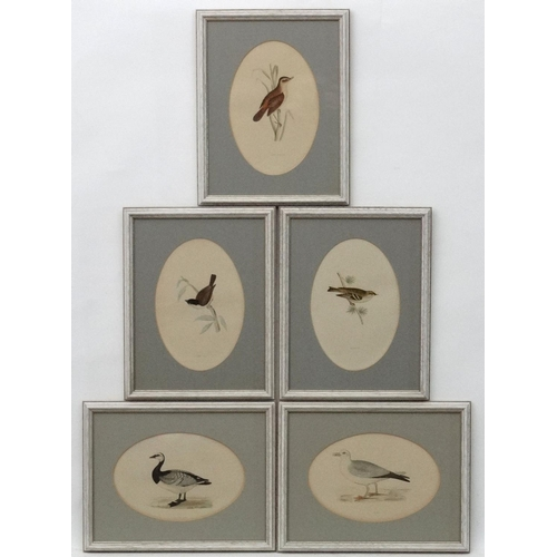 99 - Avian Studies : 5 oval hand coloured Aquatints  ' Bernicle Goose ' ' Goldcrest ' ' Fulmar ' ' Marsh ...