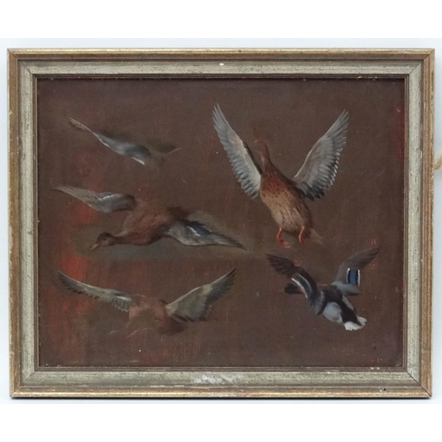 48 - Edgar Hunt (1876-1953), Oil on board, Study of duck c.1927, Ascribed verso. 7 3/4 x 9 3/4...
