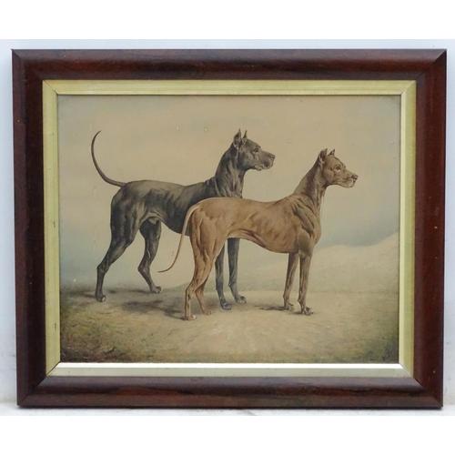 44 - Bruner (?) c 1870 Canine School, Watercolour, Superb Dog Portrait of a brace / pair of prize winning...
