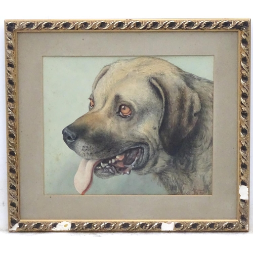 49 - Alfred William Strutt (1856-1924), Canine School, Watercolour, Head of a Mastiff dog, Signed and dat...