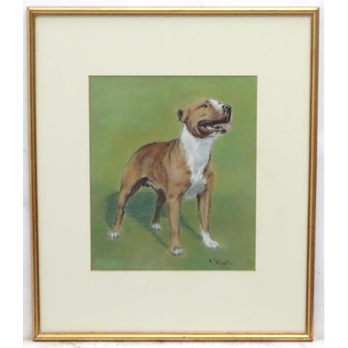 52 - A Wardle XX, Canine School, Pastels, A brindle Staffordshire Terrier dog, Signed lower right. 12 1/2...